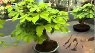 Gartenlust auf Schloss Ippenburg [Full Video]