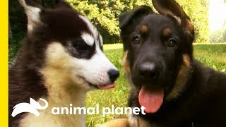 Which Adorable Dog Would You Want As A Family Pet?   Dogs 101
