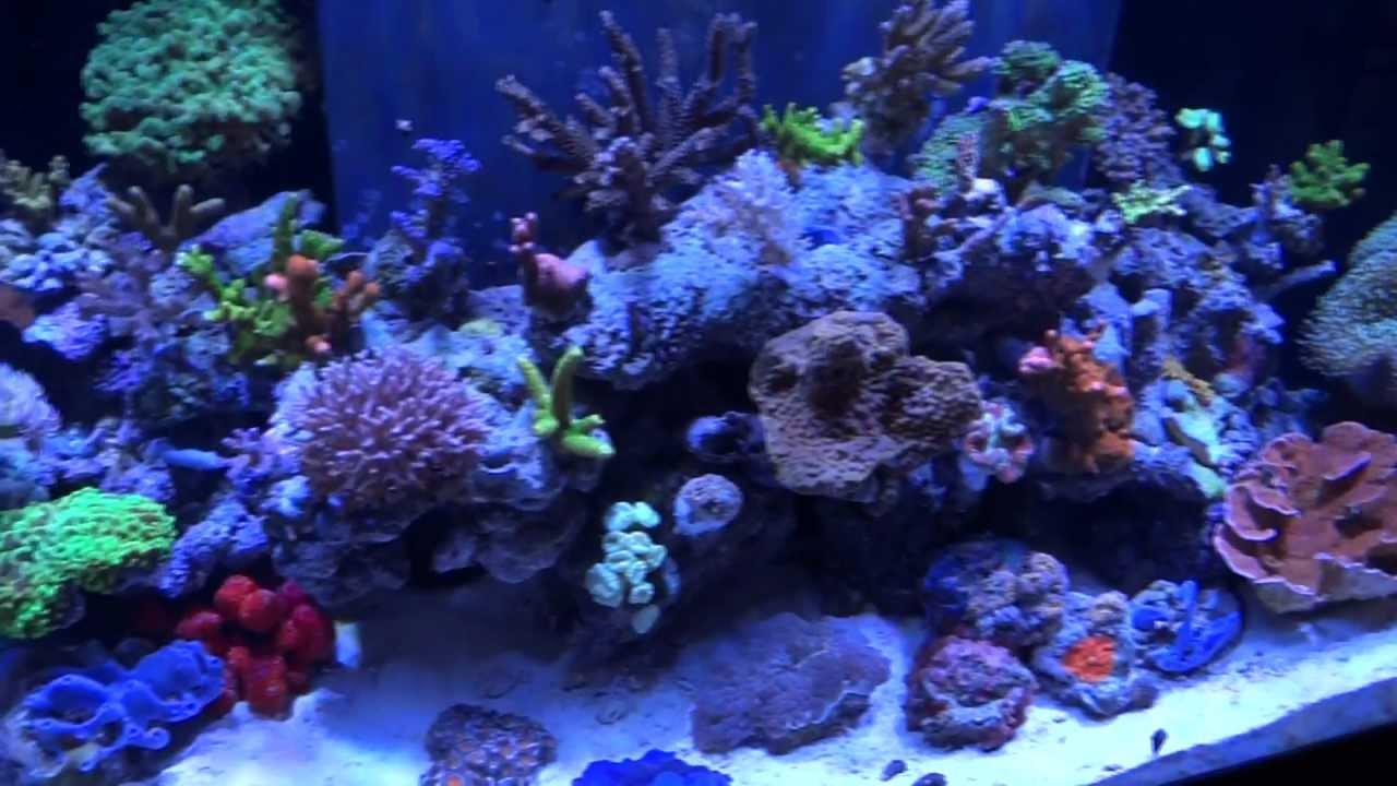 Ecotech Radion Led S On Reef Aquarium Closeup Tour