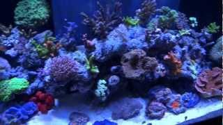 Ecotech Radion Led's On Reef Aquarium Closeup Tour