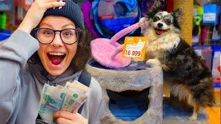 Покупаю собаке все чего она косне тся в магазине Собака сама выбирает что купить в зоомагазине