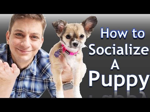How to Socialize your NEW PUPPY with People and Places