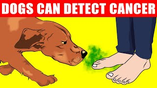 Scientists Confirm Dogs Can Detect 8 Diseases