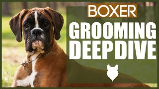 How To Groom Your BOXER DOG
