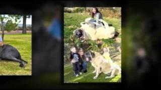 Dog Training Tips  Easy-to-train Dog Breeds
