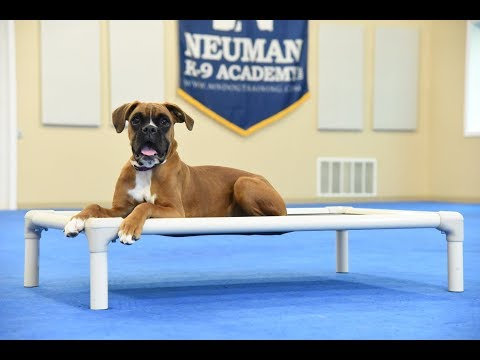 Sophie (Boxer) Puppy Camp Dog Training Video Demonstration