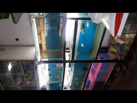 Ultimate Aqua and Pet Store Secunderabad  Vamshi cell; 8499978922,