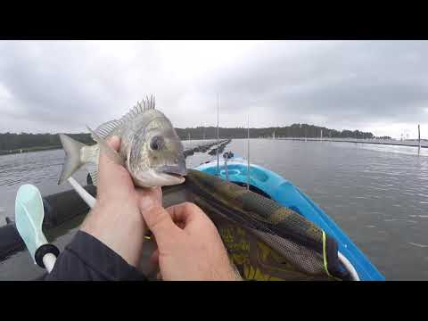 Rack Bream Fishing NSW South Coast