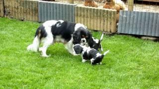 Sophie met de jonge hondjes