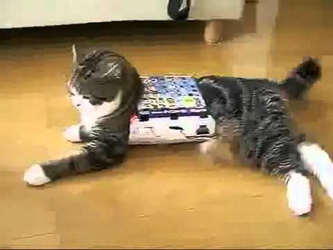 Thú vui kì quái của chú mèo