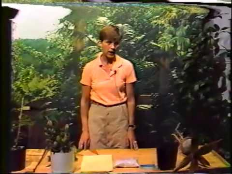 Plants in Paradise - 5 - Cuttings