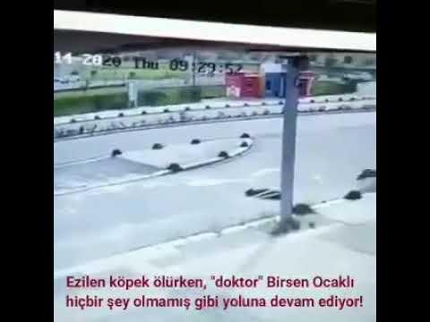 Doç. Dr. Birsen Ocaklı, Marmara Üniversitesi  köpeğe çarparak ölümüne neden olduktan sonra kaçtı.