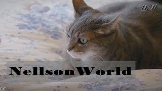 Домашние Кошки- Дикая сторона кошек