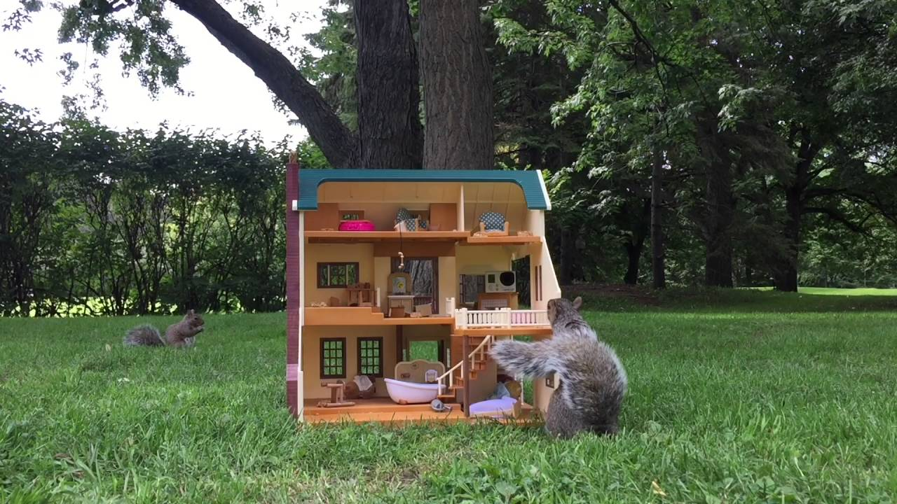 giving back to the squirrel community squirrel house youtube. Black Bedroom Furniture Sets. Home Design Ideas
