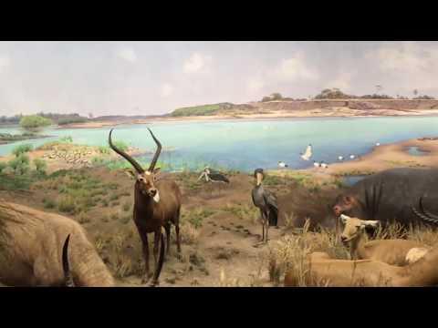 American Museum Of Natural History| MAMMALS