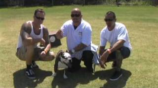 "Shorty Bull ""cooper"" Dog Training In San Diego Ca"