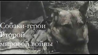 Собаки-герои Второй мировой войны