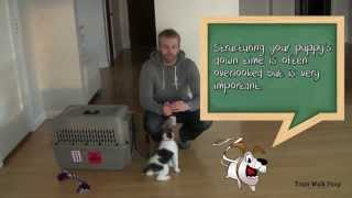 Crate Training Your Puppy Step By Step Instrucions