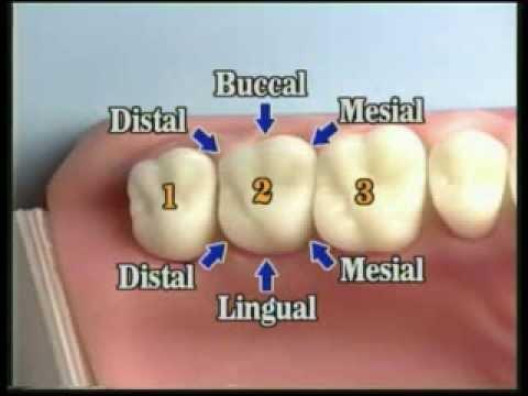 V109: Patient Records Management & Dental Charting