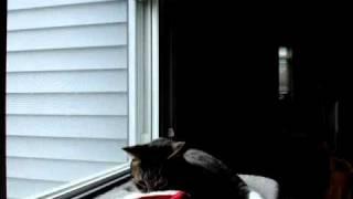 Otis the cat in a Santa Hat