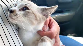 保護子猫リノ 病院よりもボール遊びがしたい子猫♪診断結果は順調♥