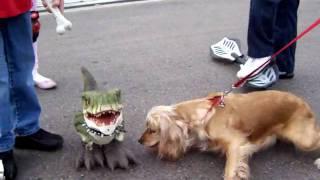 Honey American Golden Cocker Spaniel Fights The D-rex Dinosaur