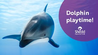 Dolphin Playtime!