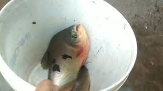 FISHING  IN COVID - 19/ SUBSCRIBE : CAT DJ VIET