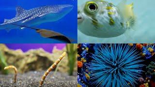 아쿠아리움의 귀여운 물고기들~
