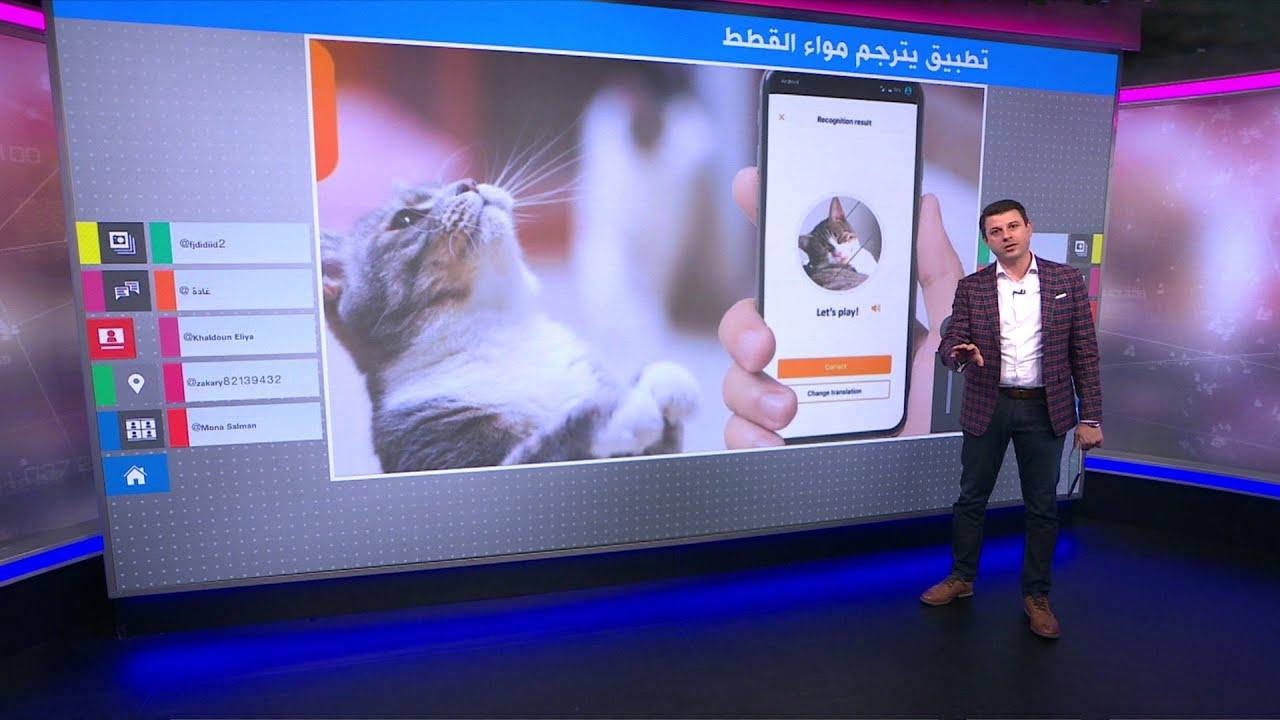 ما الذي تقوله القطط تطبيق جديد لترجمة المواء إلى كلمات Youtube