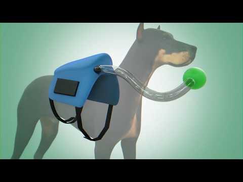 Lynn S Huff | Animal Water Carrier