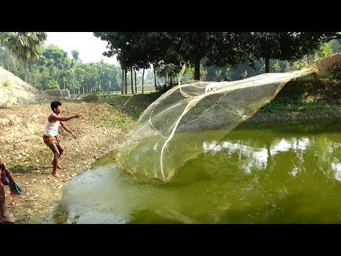 Net Fishing | Catching Fish With Cast Net | Net Fishing in the village (Part-167)