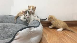 Cute baby kittens play time