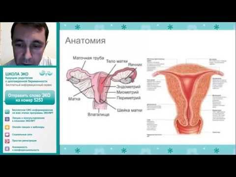 Готовимся к беременности 2: эндометриоз