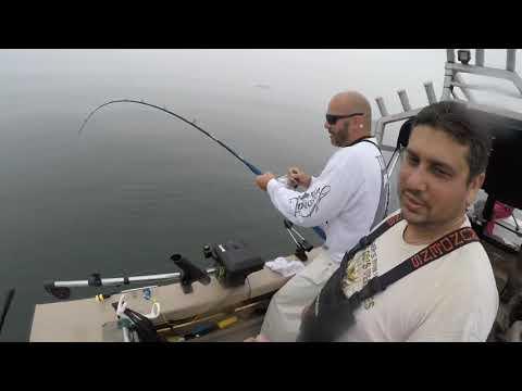 Lingcod Fishing In Half Moon Bay