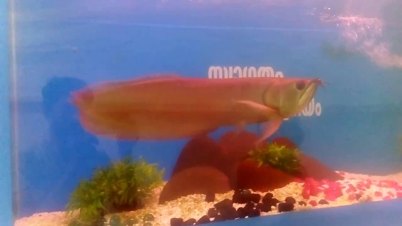 Fish Aquarium In Coimbatore - 25 most expensive rare freshwater aquarium fishes 2016 10 11