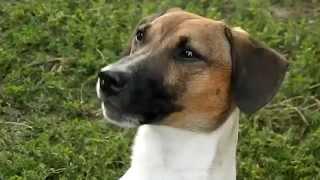 Говорящая собака говорит 'мама'!))