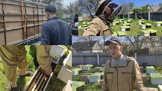 Как нам привезли 100 пчелопакетов, пересадка в ульи