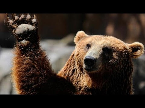 Meet the World's Most Bearish Investment Manager