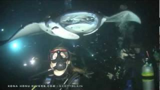 Manta Ray Night Dive Kona Honu Divers Hawaii