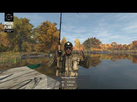 Fishing Planet - Emerald Lake - New York - Common Bluntnose Minnow