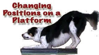 Changing Positions On The Platform - Clicker Dog Training