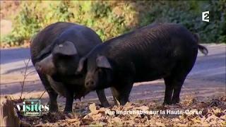 Le porc Nustrale - Visites privées