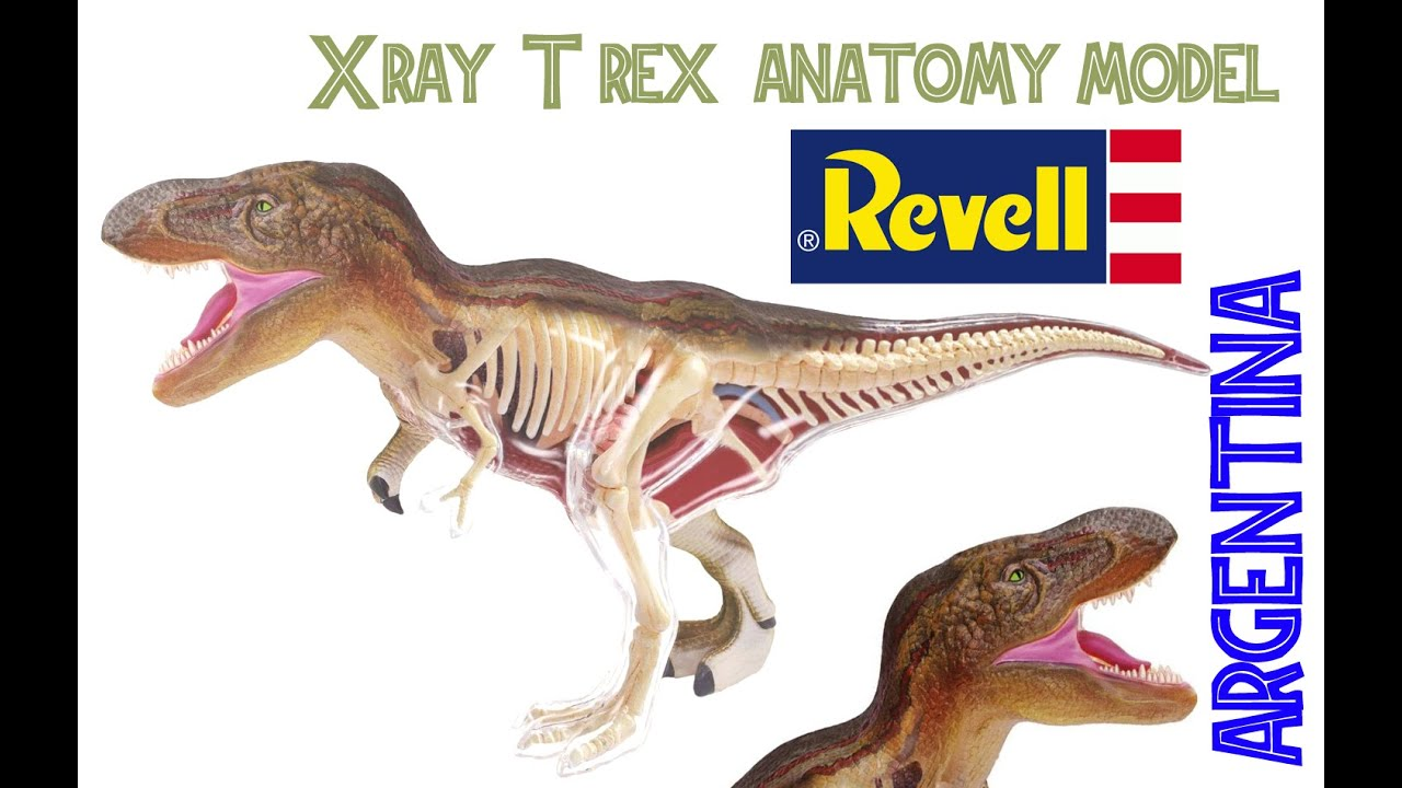T-rex Anatomy Model ~ X-ray Revell (4D Vision) - YouTube