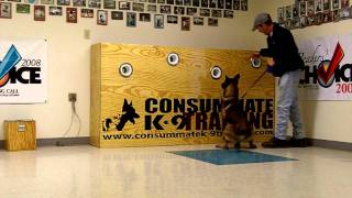 "K9 ""buster"" Explosives Detection Training"