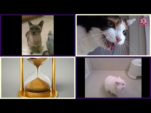 Cats Meowing JEOPARDY! (Thinking Music) (Acapella)