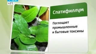 Пять самых полезных растений для дома