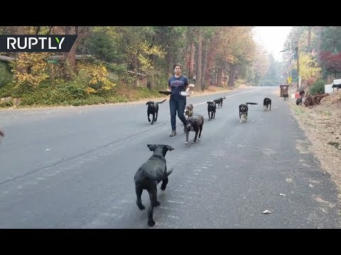 Fleeing animals find sanctuary from Camp Fire sweeping through California