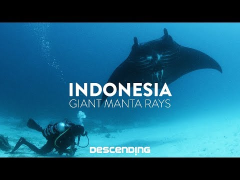 DESCENDING 4K | S1 E12 | The Giant Manta Rays