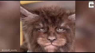 Котята с внешностью оборотней покорили соцсети видео.